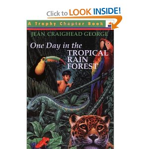 One Day in the Tropical Rain Forest